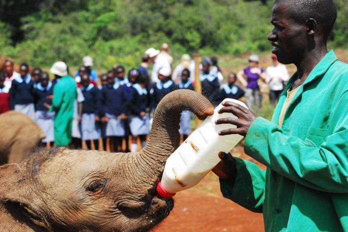elefante ong solidaridad